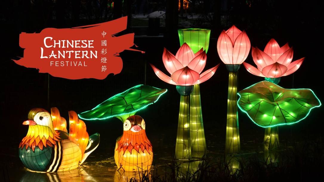 charlotte chinese lantern